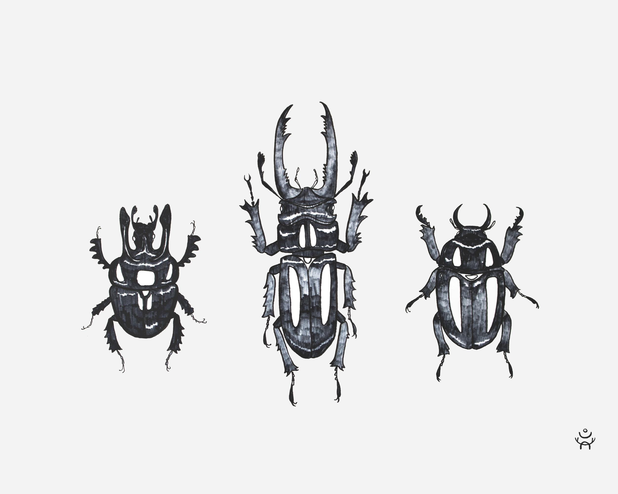beetlesL.jpg