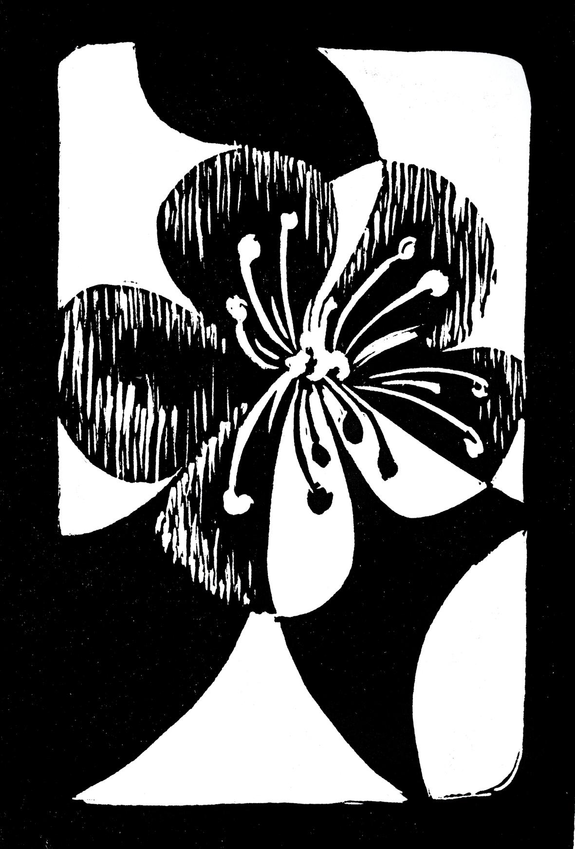 Gimmel for Growth  Flower: Sundew  (Drosera pallida)