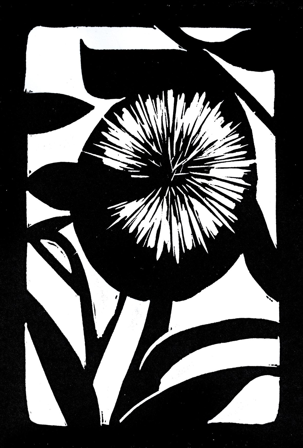 Ayin for Clarity  Flower: Catspaw  (Angozanthus humilis)