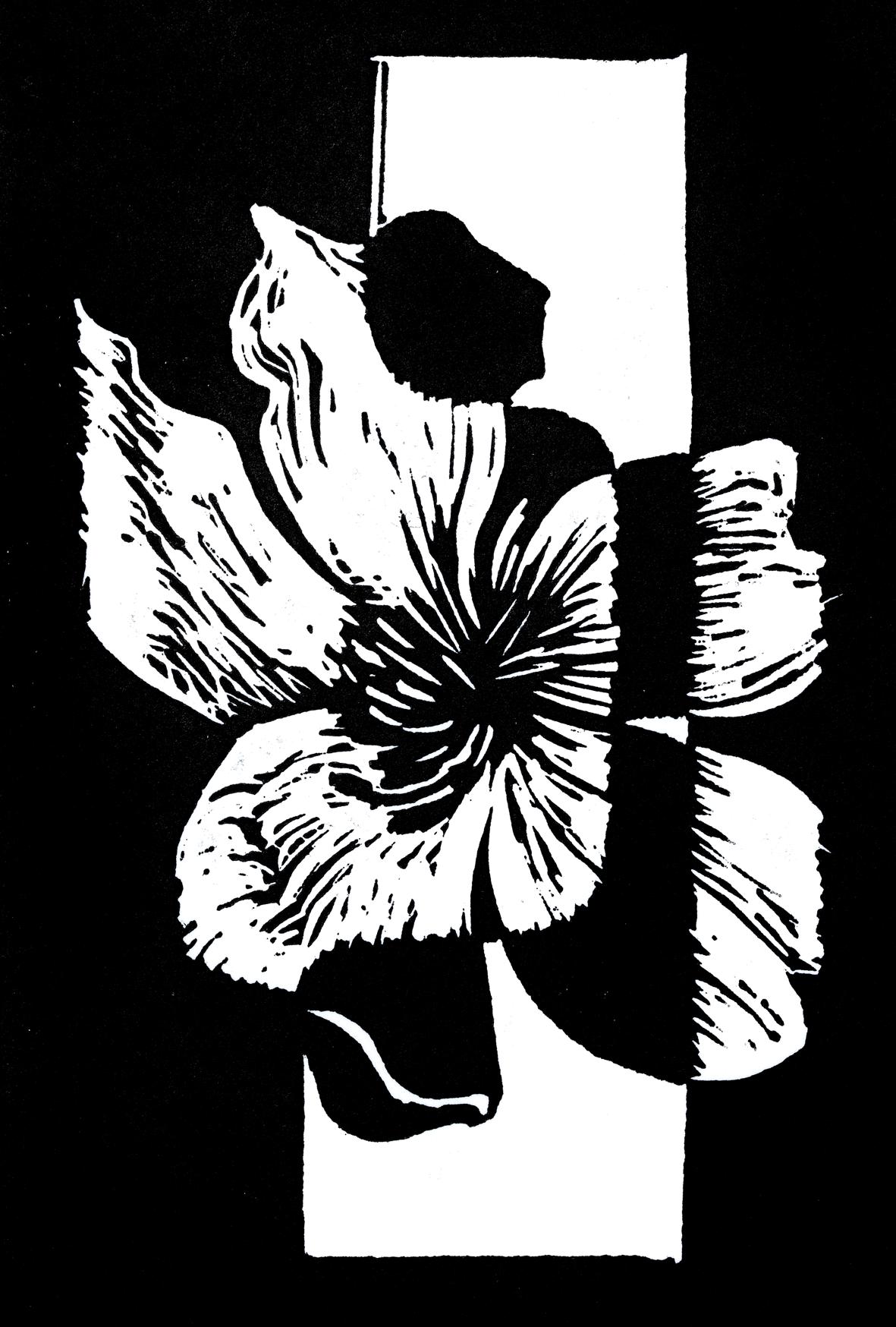 Nun for Confidence  Flower: Snake Vine  (Hibbertia scandens)