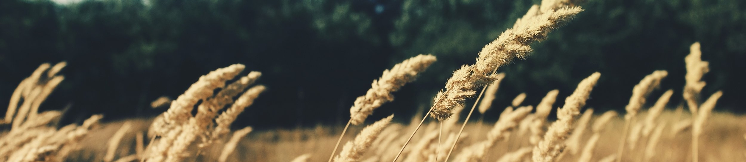 crop yellow.jpg