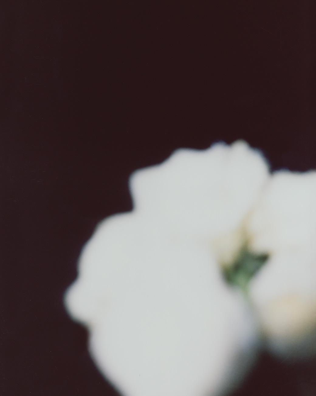 Kristina-Loewen_Flower.jpg