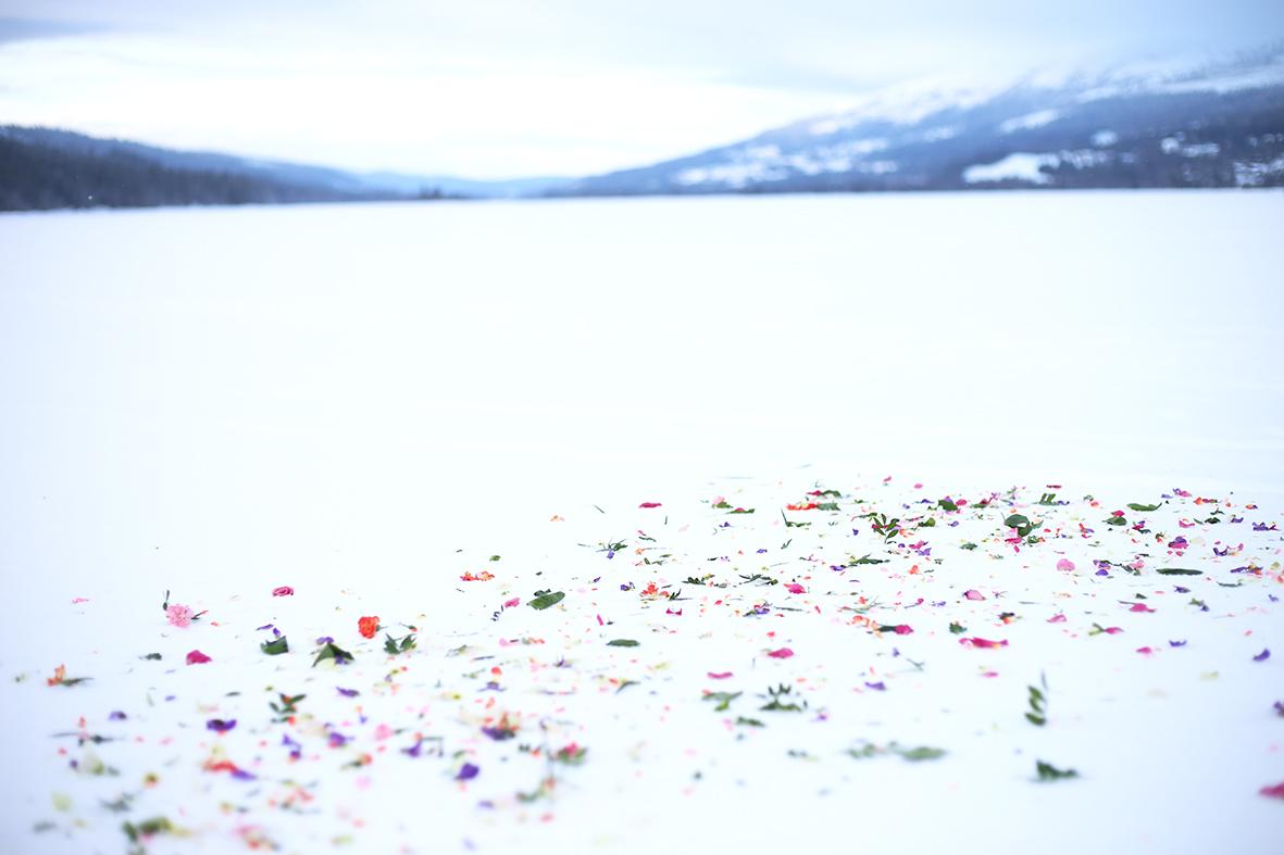 Blomblad_Åresjön_HannaWendelbo.jpg