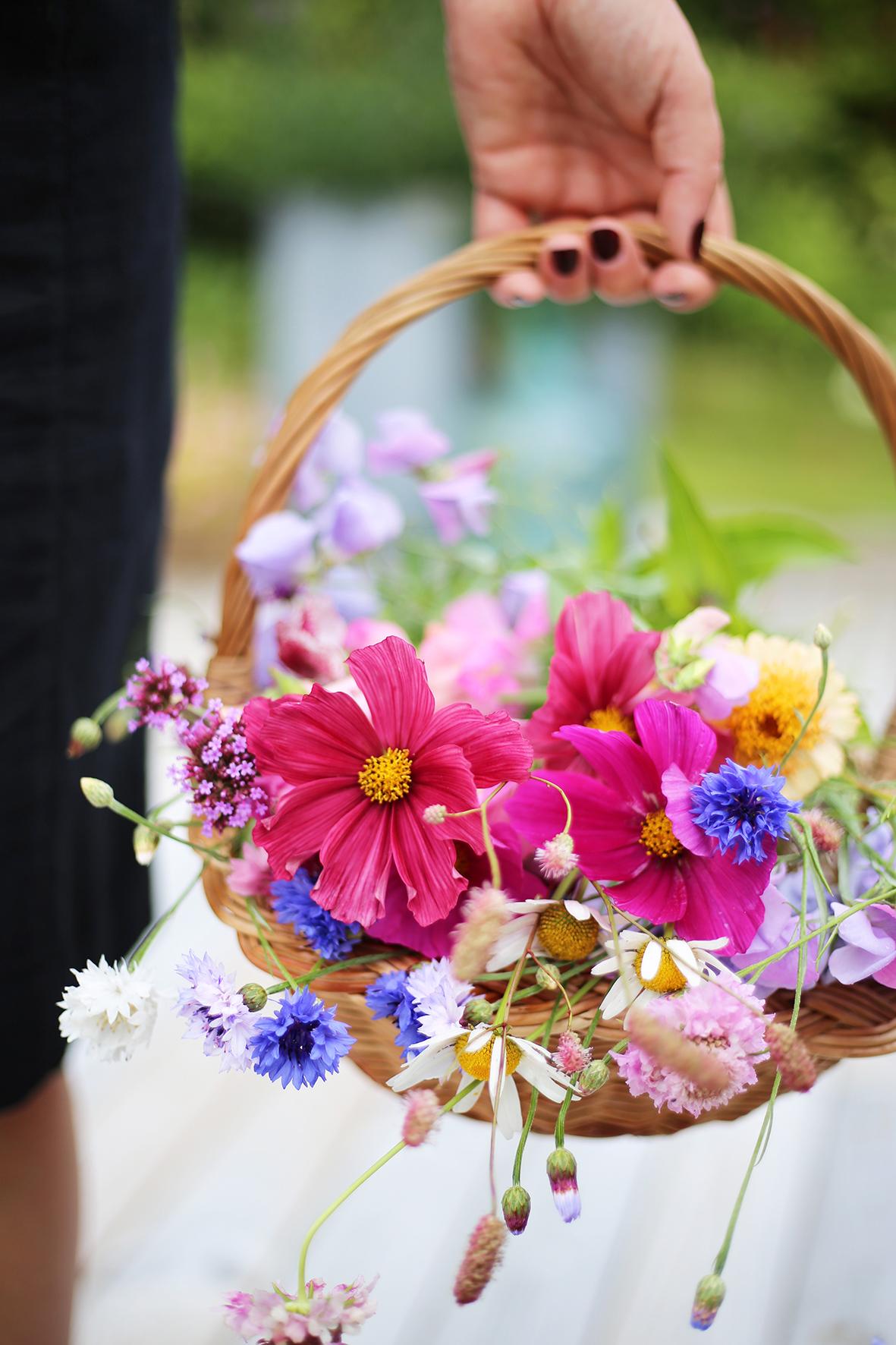 Plocka in blommor varje dag.