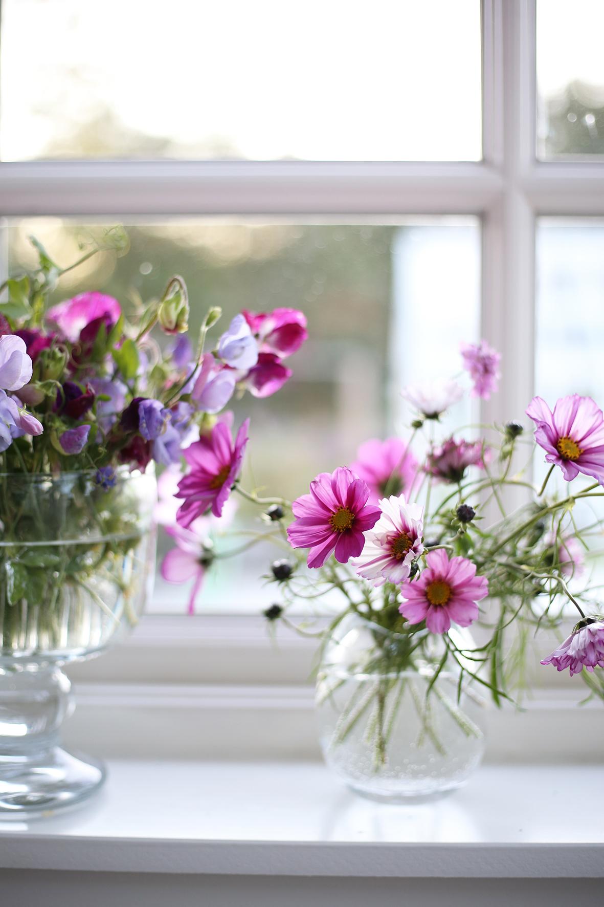 Blommor i mitt fönster.
