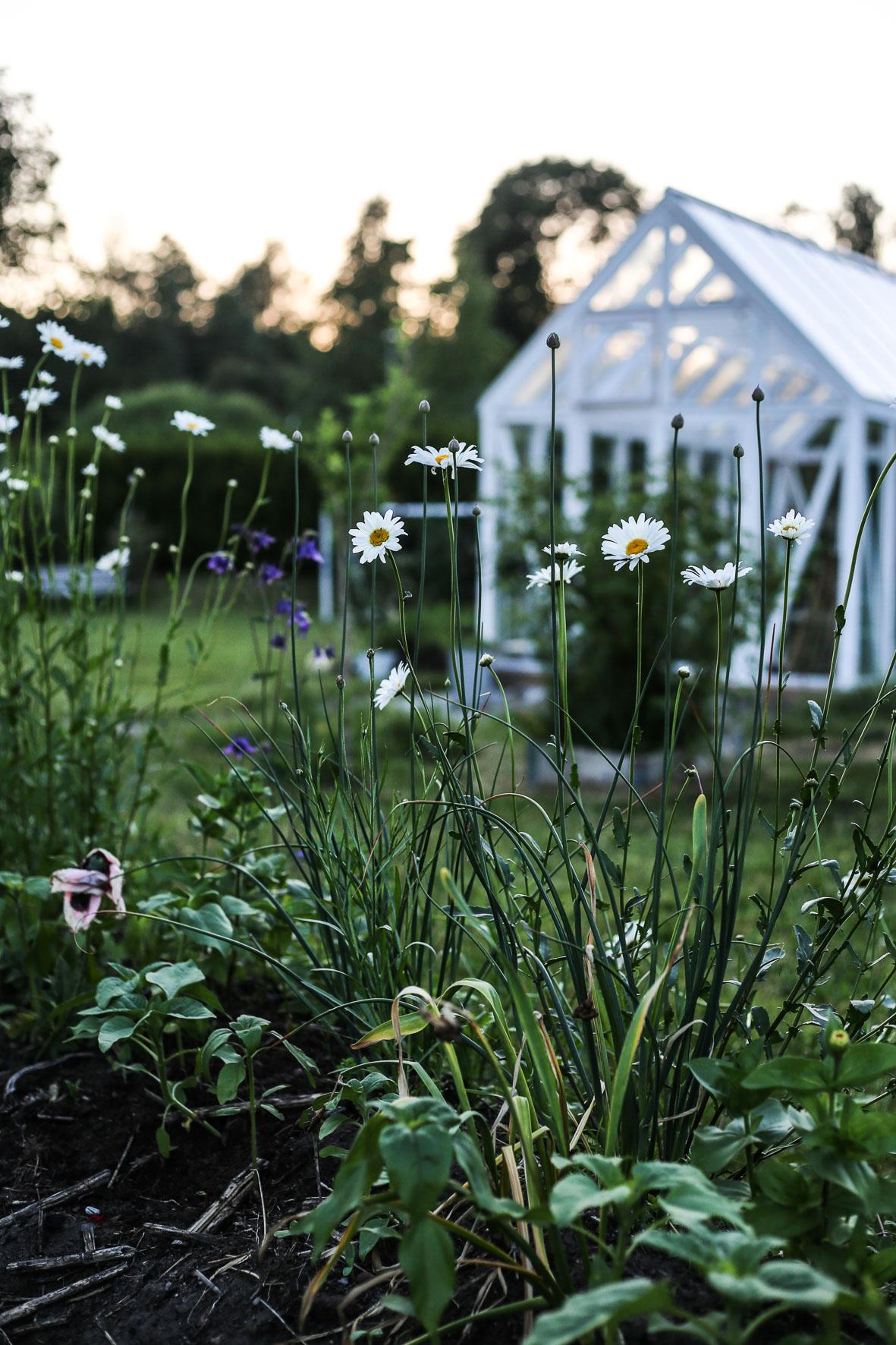 HannaWendelbo_Trädgård-Växthus.jpg