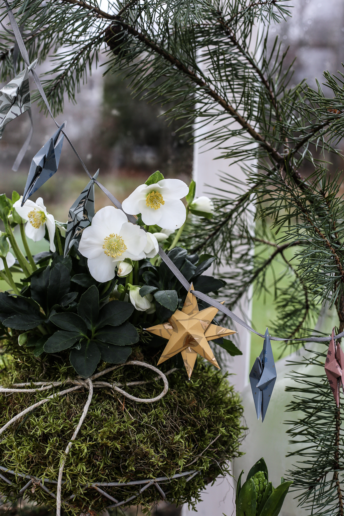 Christmas_star_HannaWendelbo-17.jpg