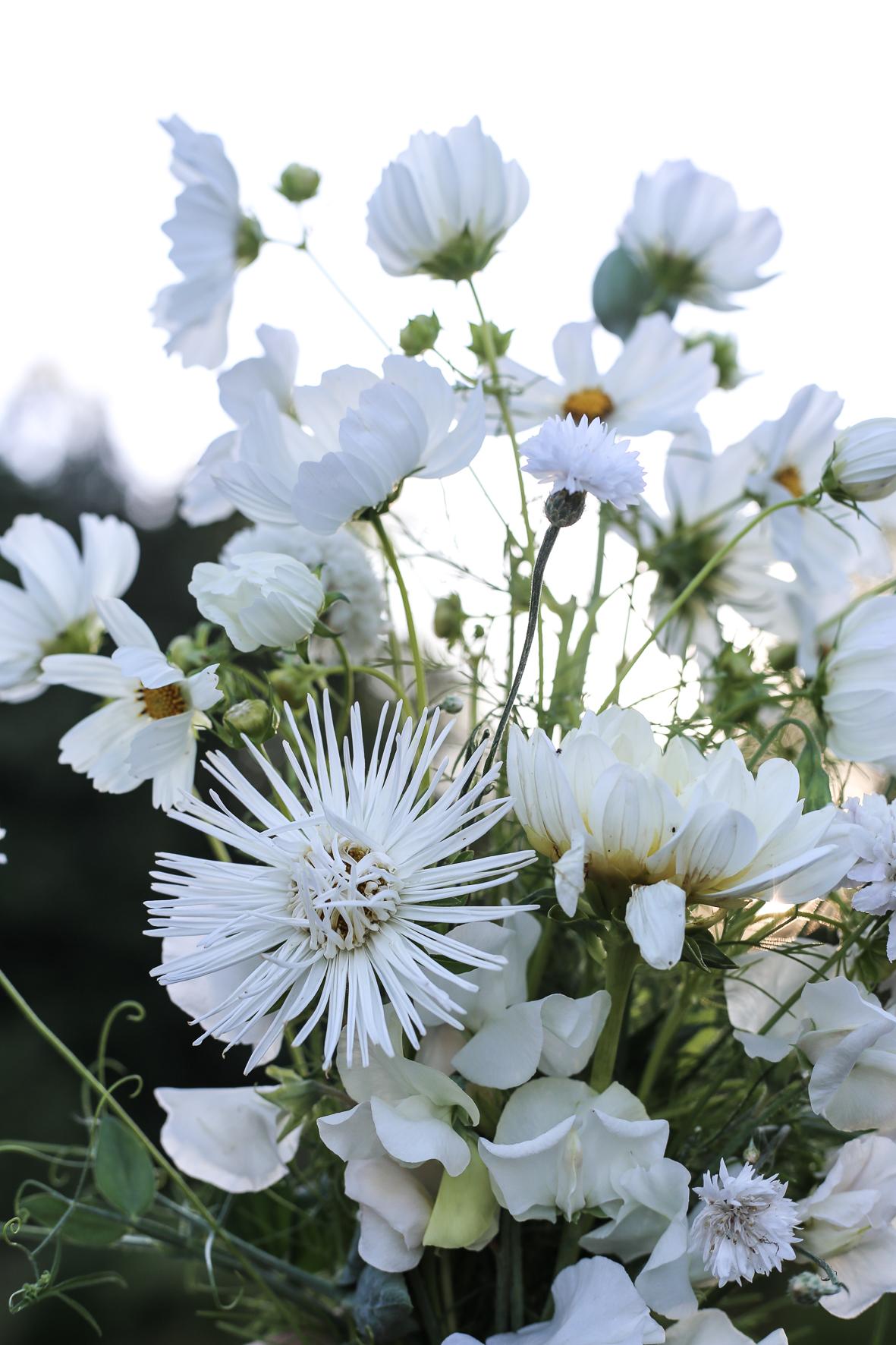 Rosenskära, sommaraster, dahlia, luktärt och blåklint i en krispigt vit bukett.