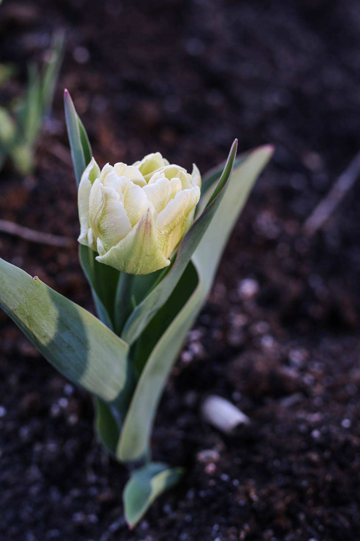 HannaWendelbo_växthus_april_II-19.jpg