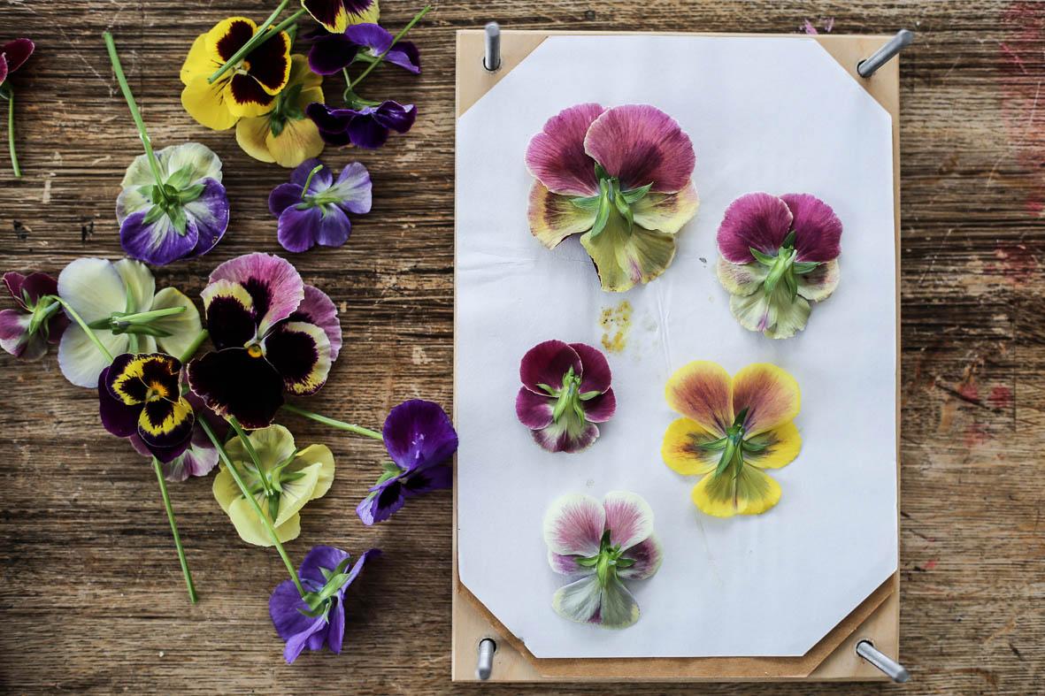 Blomsterkakor_HannaWendelbo-14.jpg