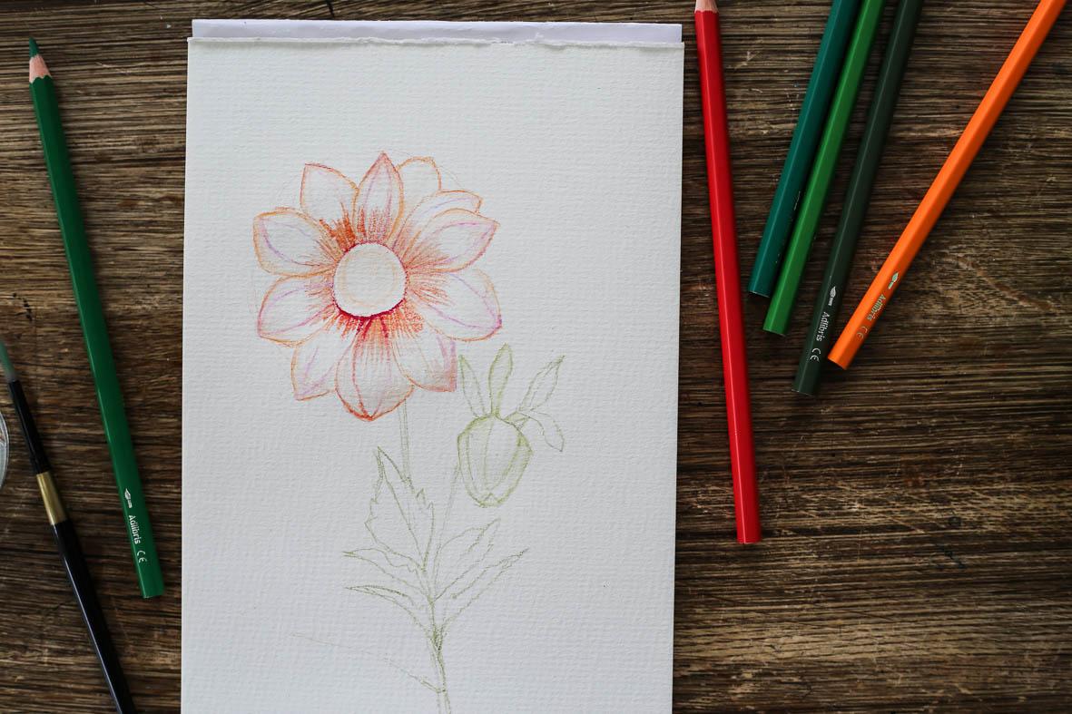HannaWendelbo_akvarellpennor_AdLibris-15.jpg