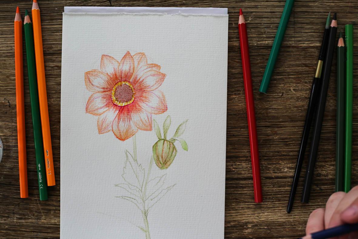 HannaWendelbo_akvarellpennor_AdLibris-17.jpg