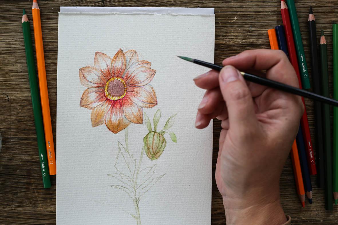 HannaWendelbo_akvarellpennor_AdLibris-18.jpg
