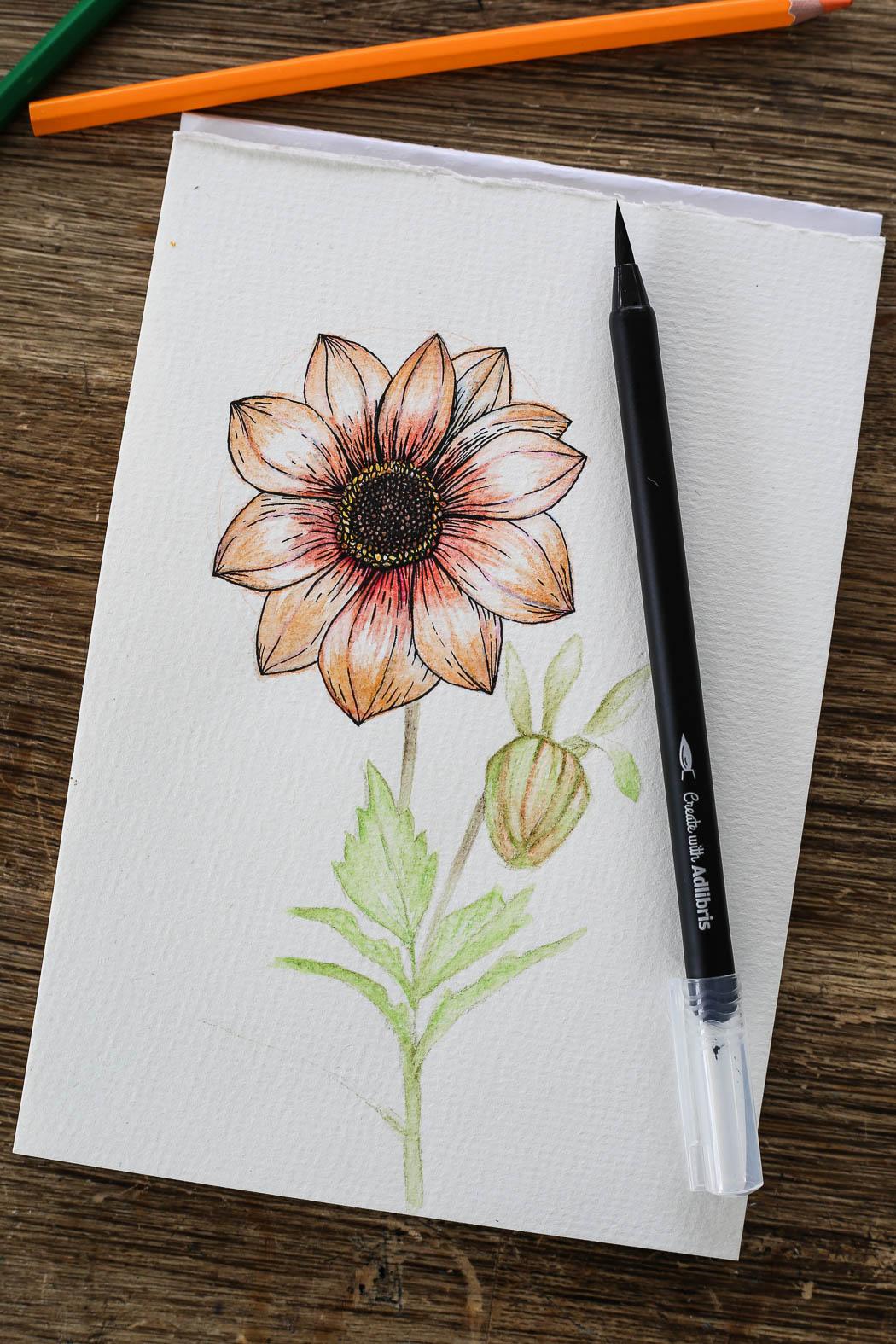 HannaWendelbo_akvarellpennor_AdLibris-23.jpg