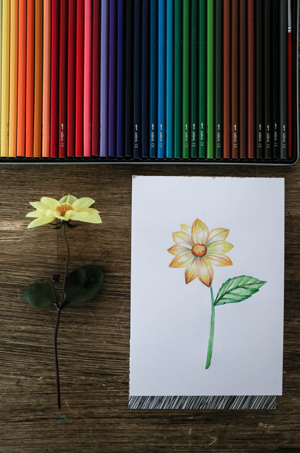 HannaWendelbo_akvarellpennor_AdLibris-3.jpg