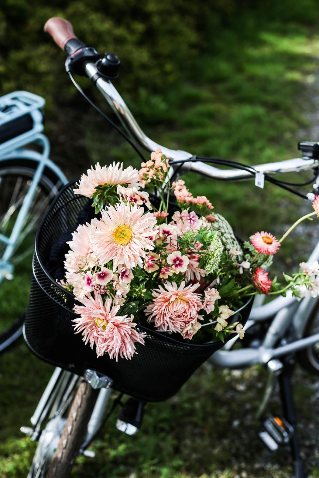 Att cykla Kattegattleden med cykelkorgen full med blommor, det är livet!