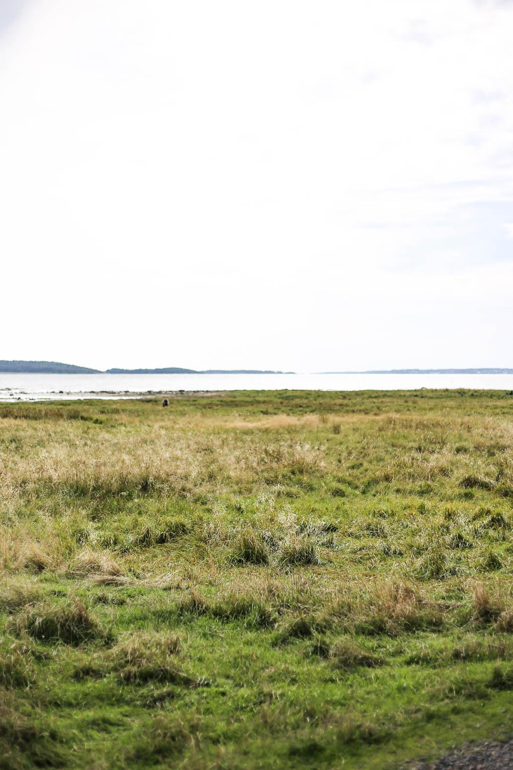 Med utsikt över Kungsbackafjorden. På havängarna betar fåren.