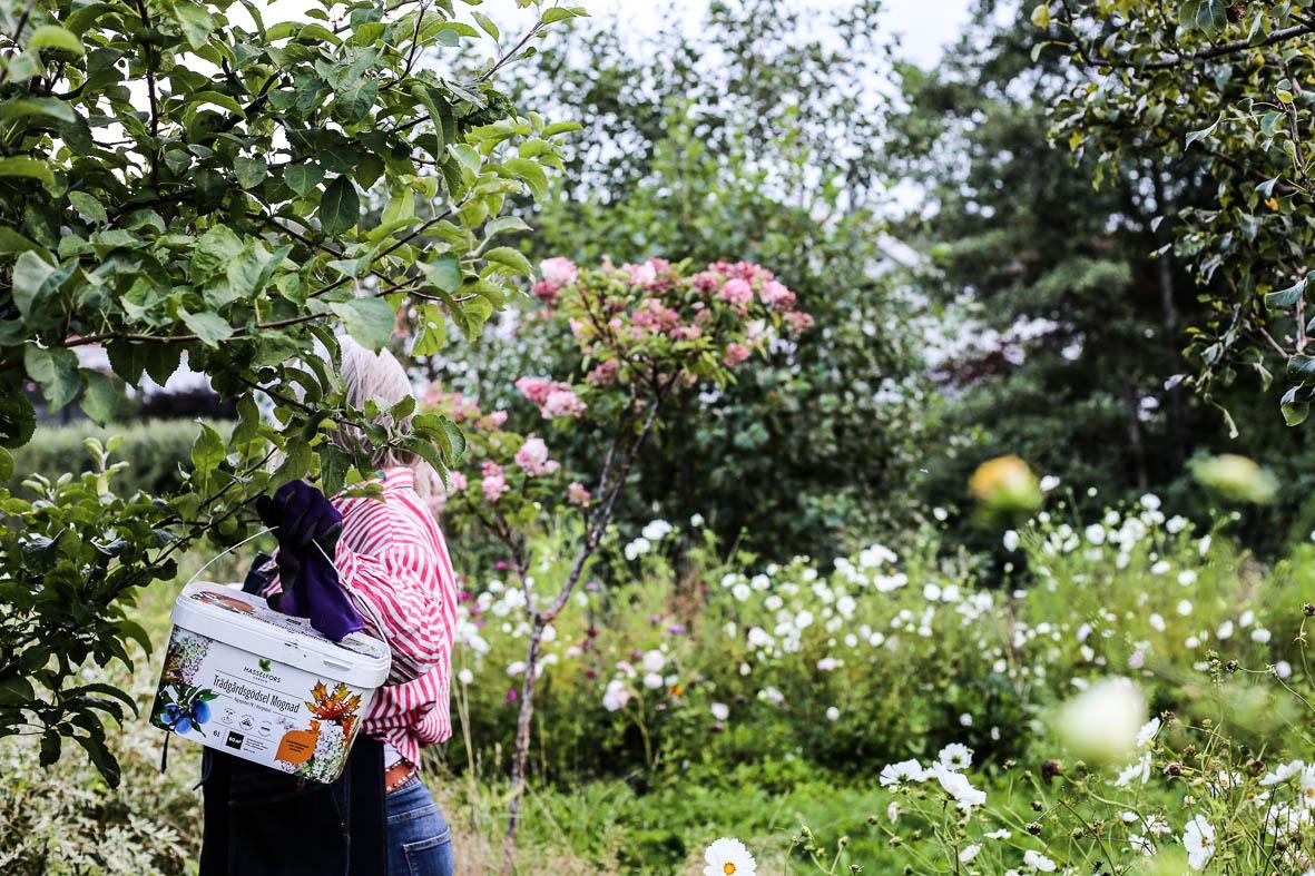 Höstfix-i-trädgården-HannaWendelbo-Hasselfors-88.jpg