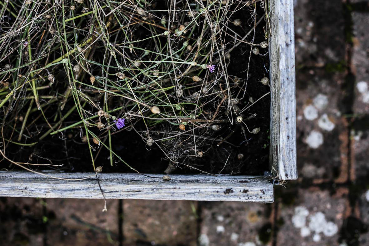 Höstfix-i-trädgården-HannaWendelbo-Hasselfors-80.jpg