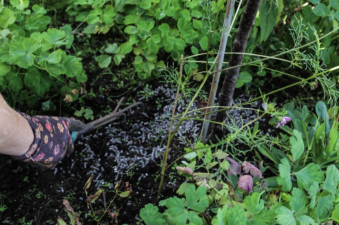 Höstfix-i-trädgården-HannaWendelbo-Hasselfors-20.jpg