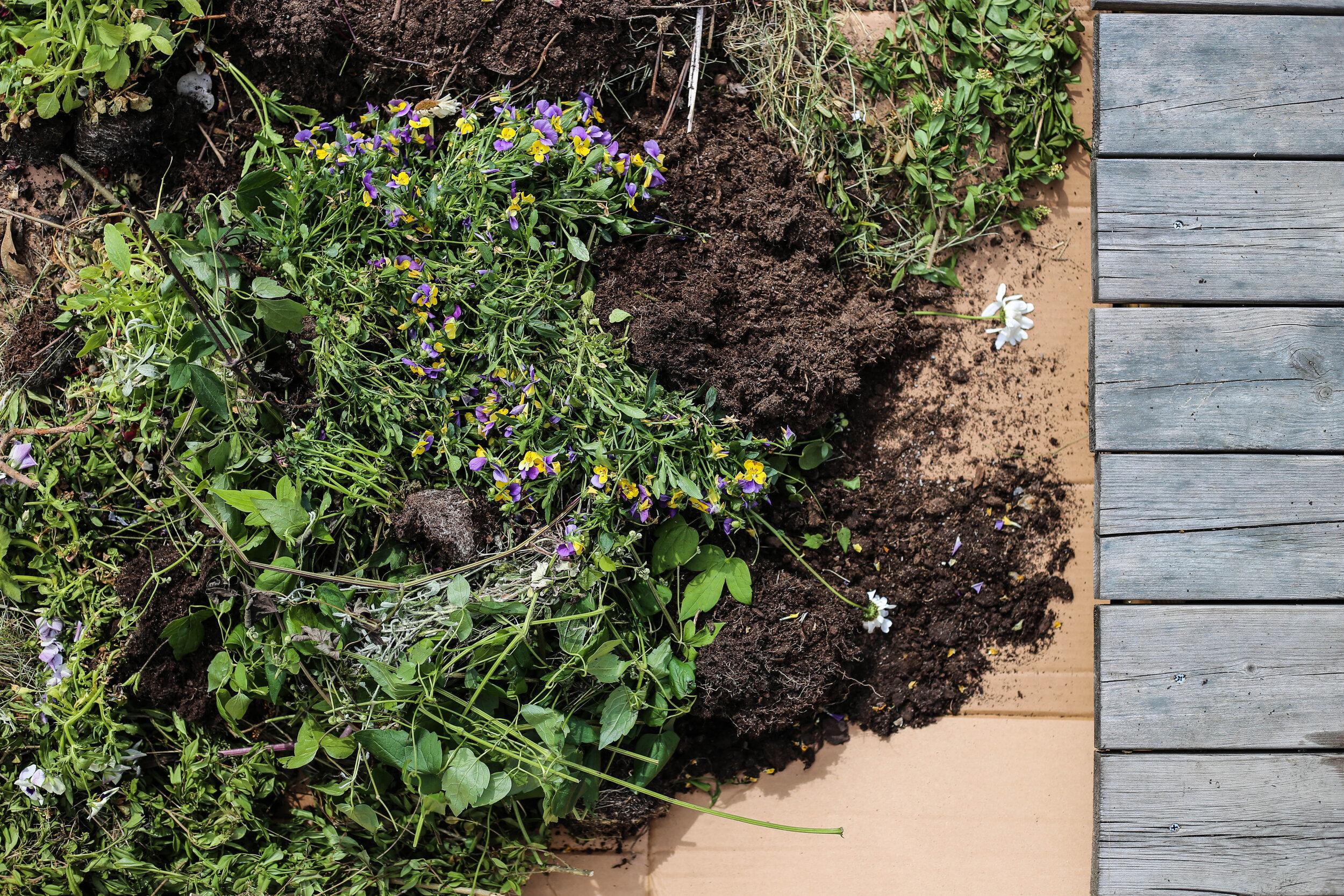 Täck kartongen med allt trädgårdsbös som finns. Jag tömmer gärna jorden från mina krukor med sommarblommor och tomater. Ovanpå detta lägger jag ett lager med matjord eller Hasselfors P-jord.