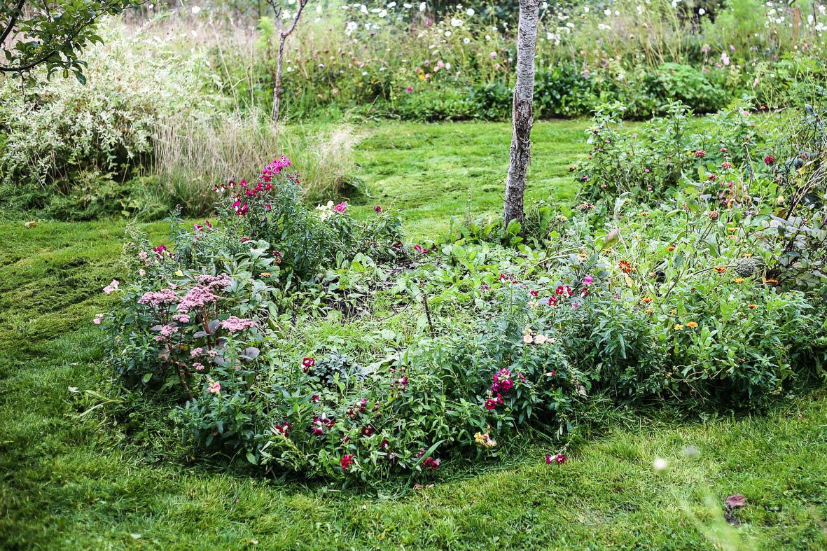En ruffsig trött rabatt där sommarblommorna har börjat vissna ner. Perfekt att göra iordning för höstplantering!