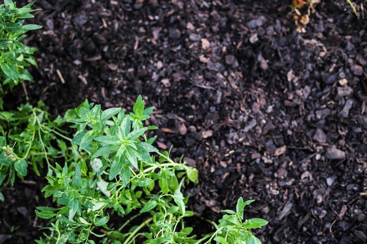 Täckbarken hjälper till att hålla fukten kvar och ogräs borta.