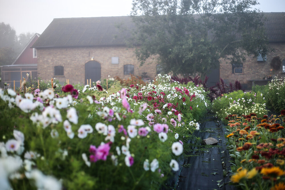 AKVARELLWORKSHOP PÅ THE FLOWERFARM HÖGANÄS 12 AUGUSTI