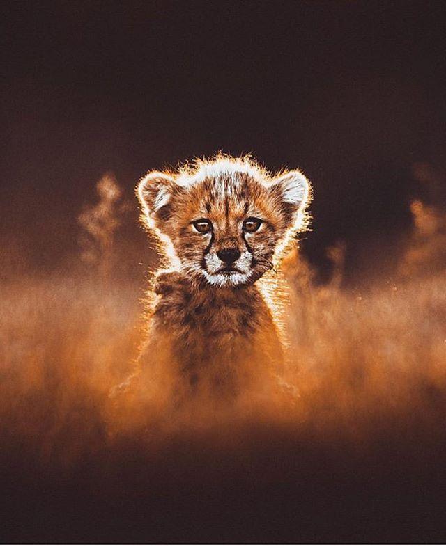 Hello Africa! 📸 - @donalboyd