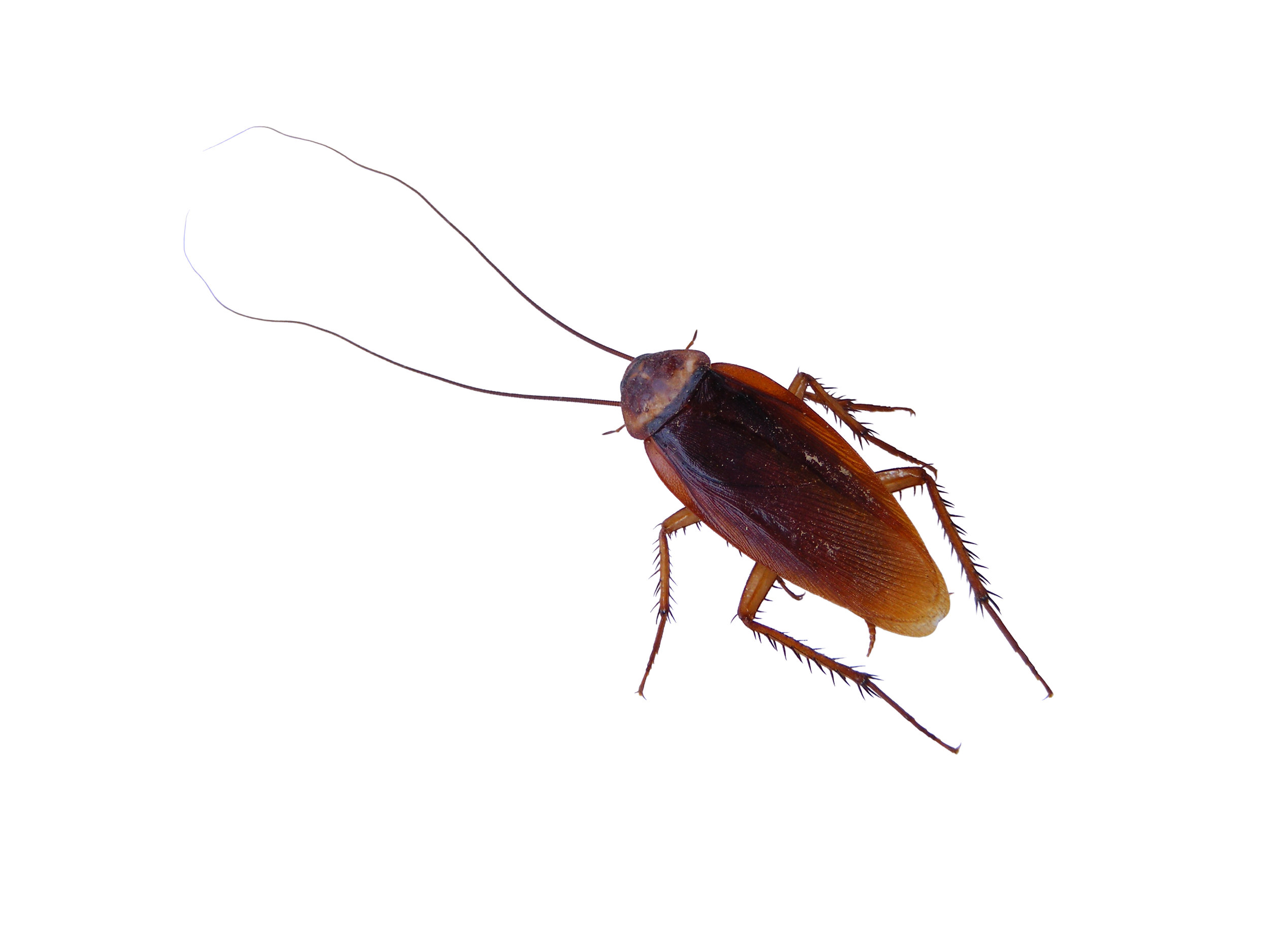 cockroach-1-1366992.jpg