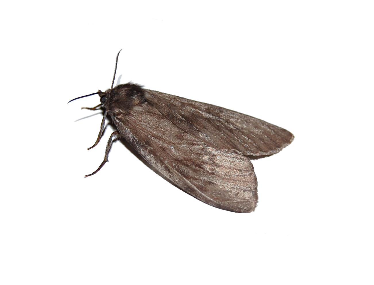 night-moth-1352686.jpg