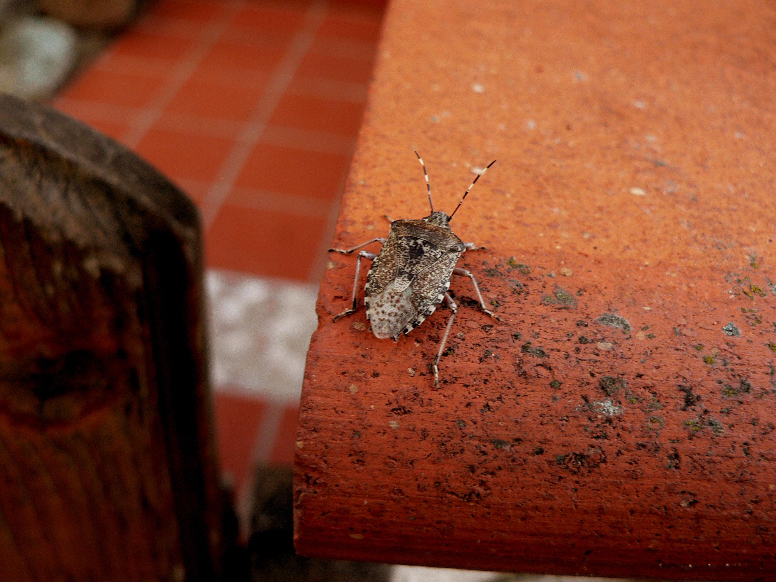 stinkbug-in-action-1365279.jpg
