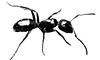 ant_small_2.png