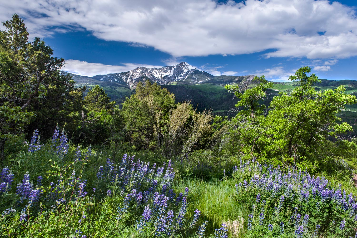 Whitehorse-Mtn-w-Lupine,-small.jpg
