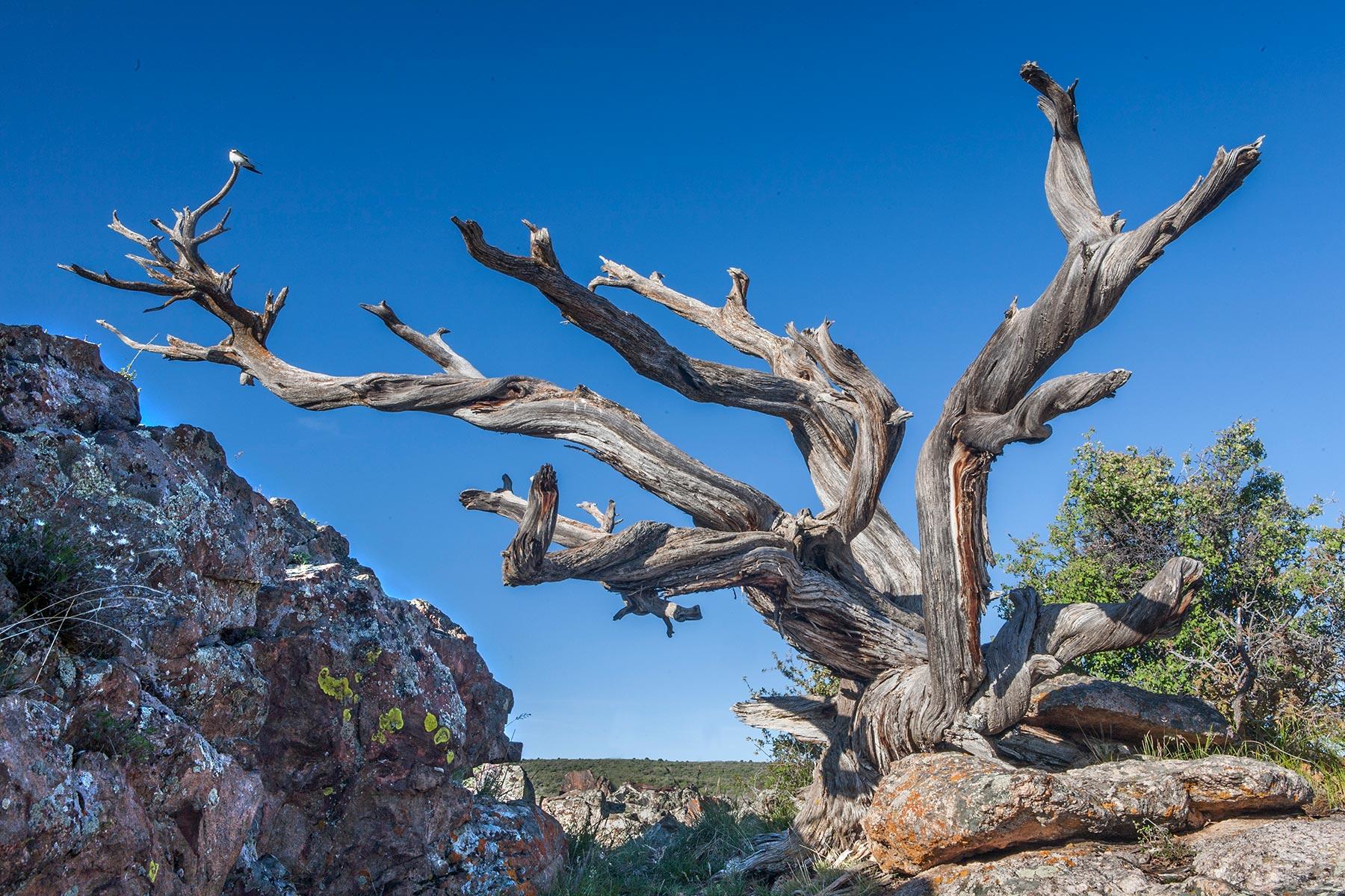 Rock-Point-Tree-w-bird.jpg