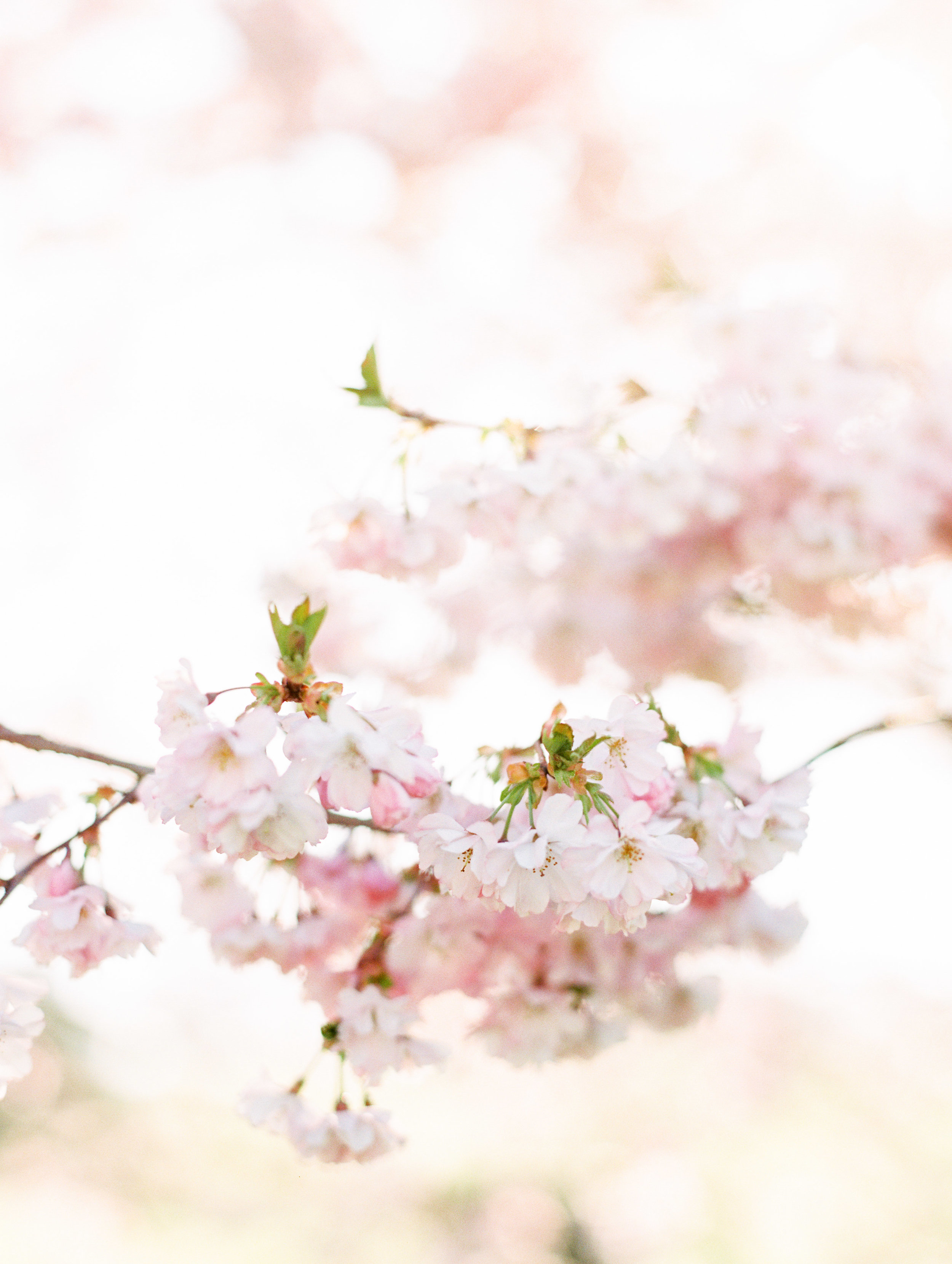 The Timeless Stylist-Elegant Wedding and Event Stylist-Spring Wedding-Blossom