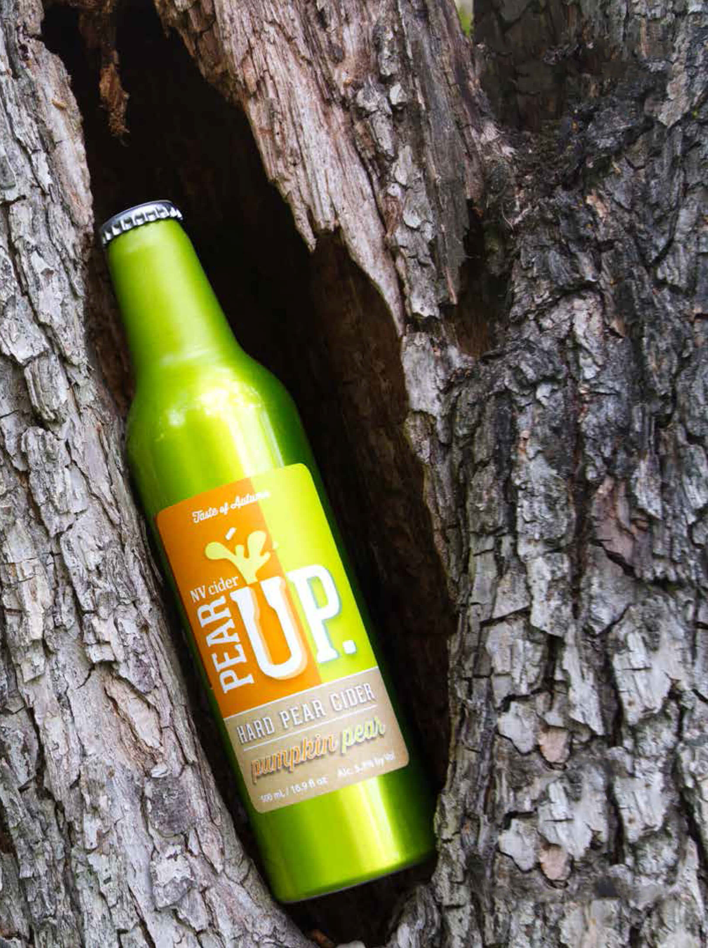 A bottle of pumpkin-flavored Pear Up cider sits in a 107-year-old Anjou tree in Kevin Van Rennen's orchard in East Wenatchee. Photo by Michelle Naranjo, Foothills Magazine.