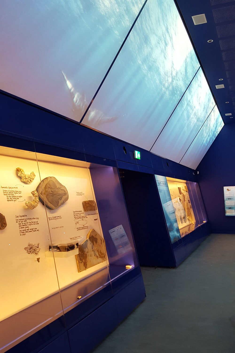 Huge format video sits above fossils in display cases in the Etches Collection exhibition