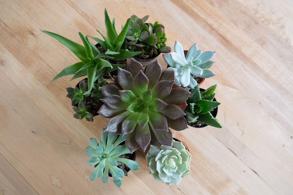 loft-succulent.jpg