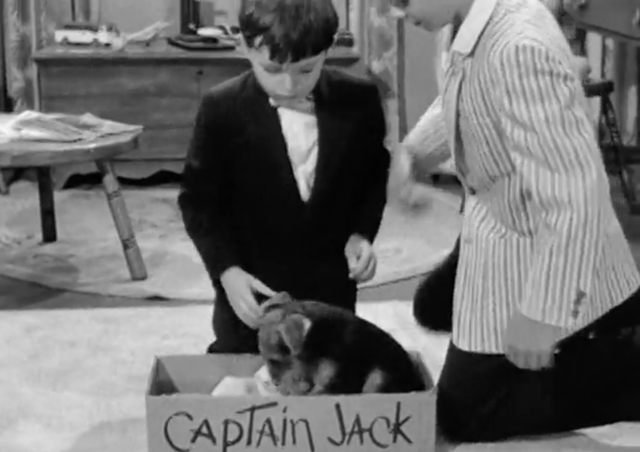 Wally and The Beaver meet their new dog, Captain Jack. Who wrote it that way on the box? Minerva?
