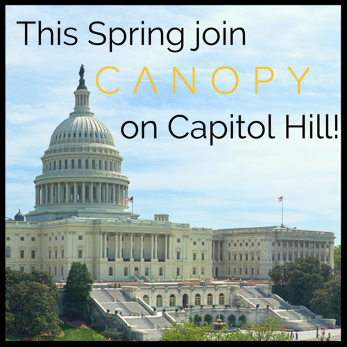 Canopy+on+Capitol+Hill+3.png