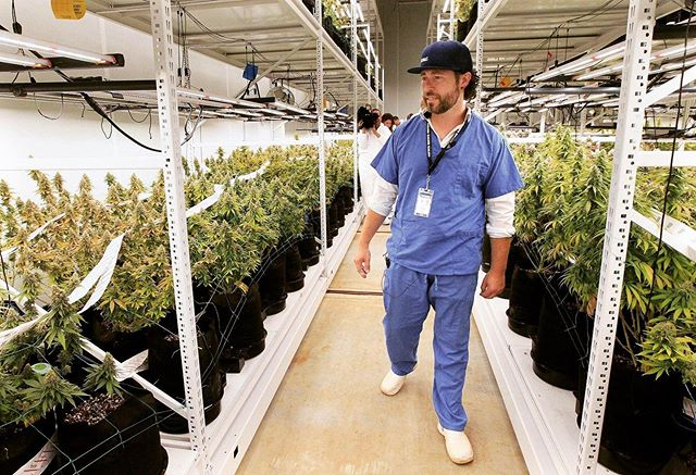One of our clients was just featured in the Akron Journal celebrating the first harvest at their new cultivation facility, Galenas. We're working on some really cool brands with these folks in conjunction with @rowecu and can't wait to see it all come to life!!! Link to article in bio 🙌🏼