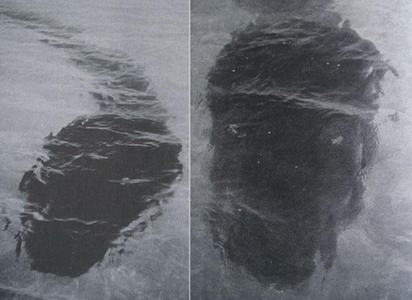 Hook-Island-tadpole-monster-composite-600-px-tiny-Nov-2013.jpg