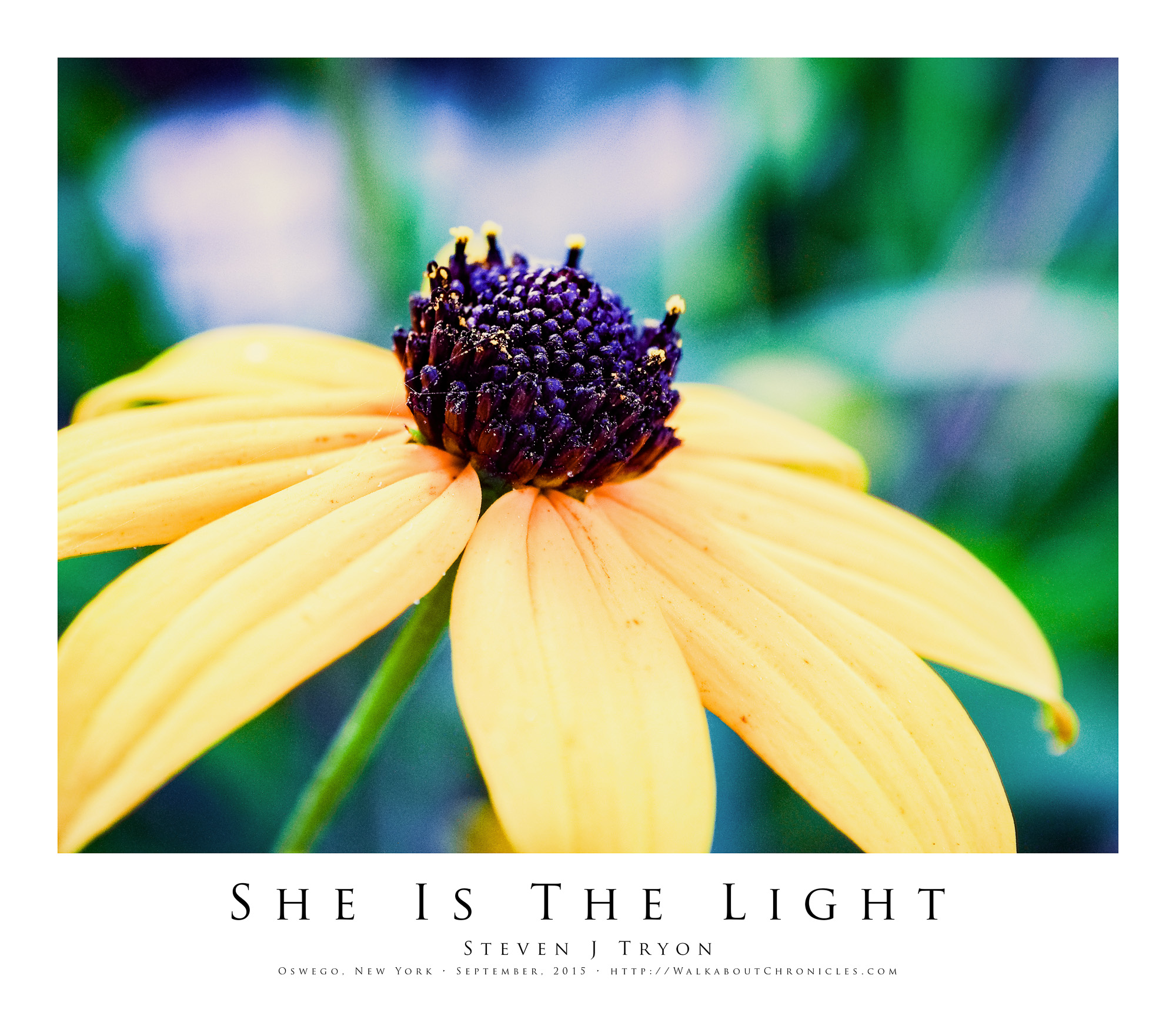 She Is The Light