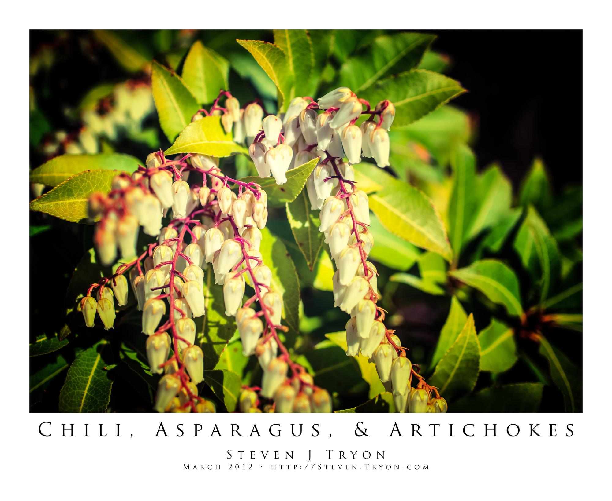 Chili, Asparagus, & Artichokes