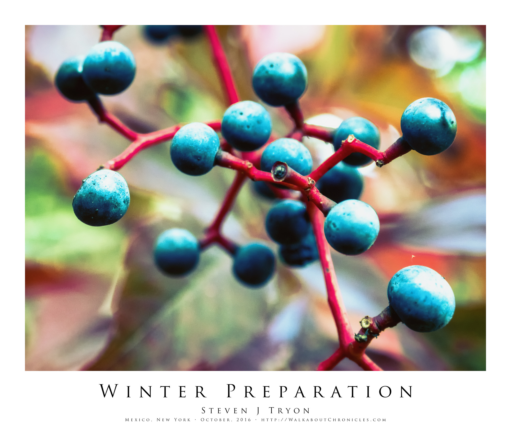 Winter Preparation