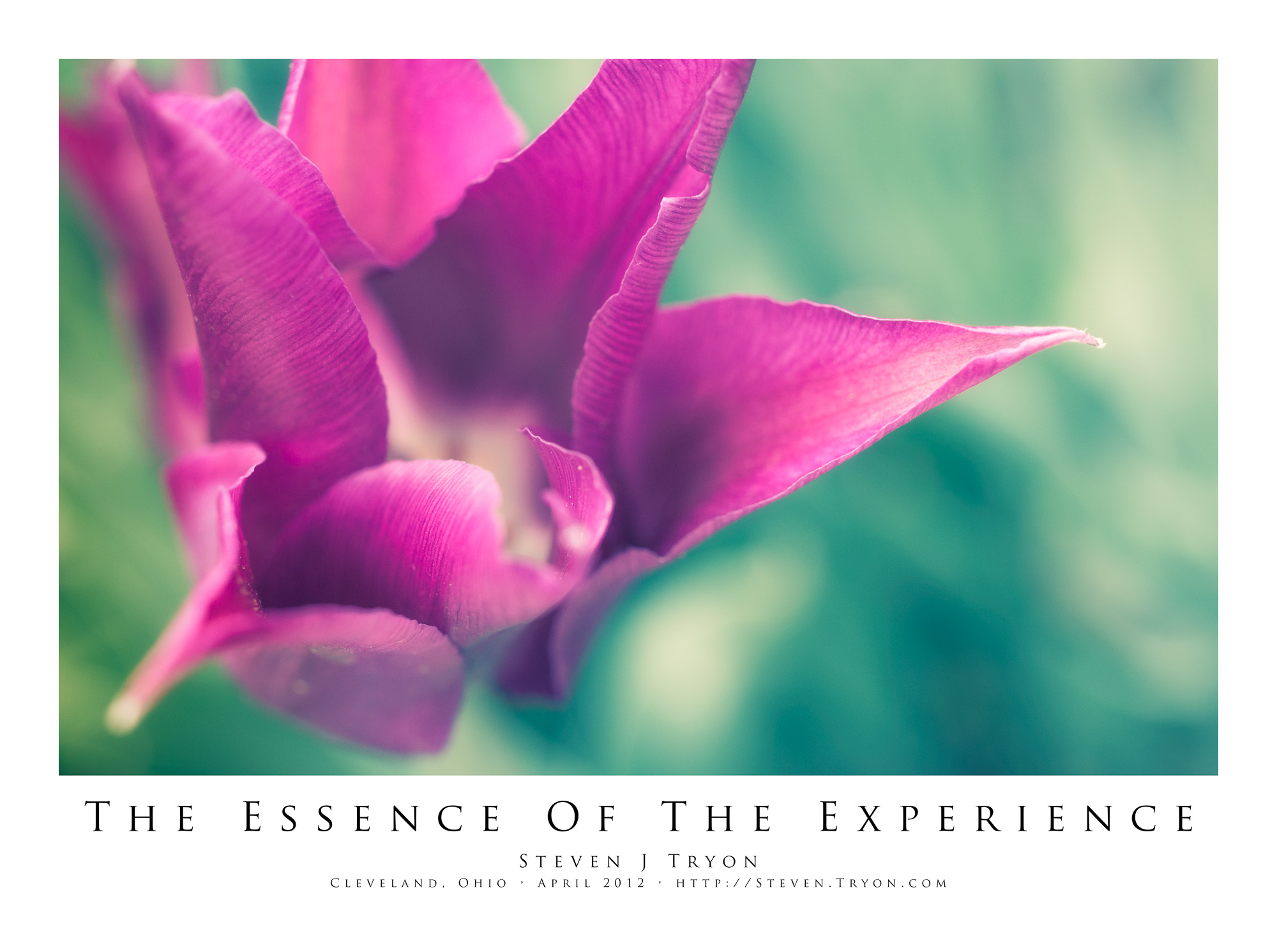The Essence Of The Experience