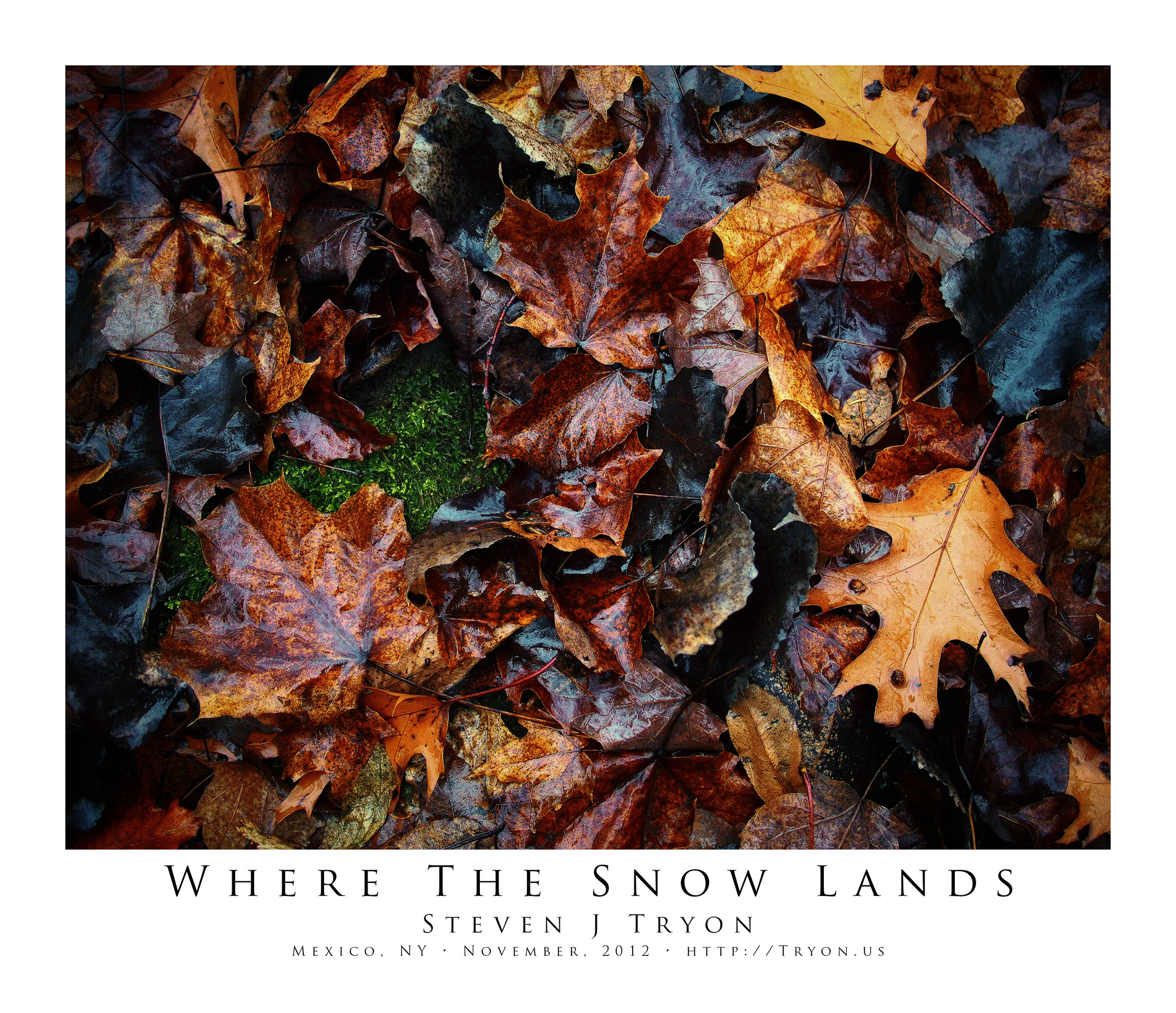 Where The Snow Lands