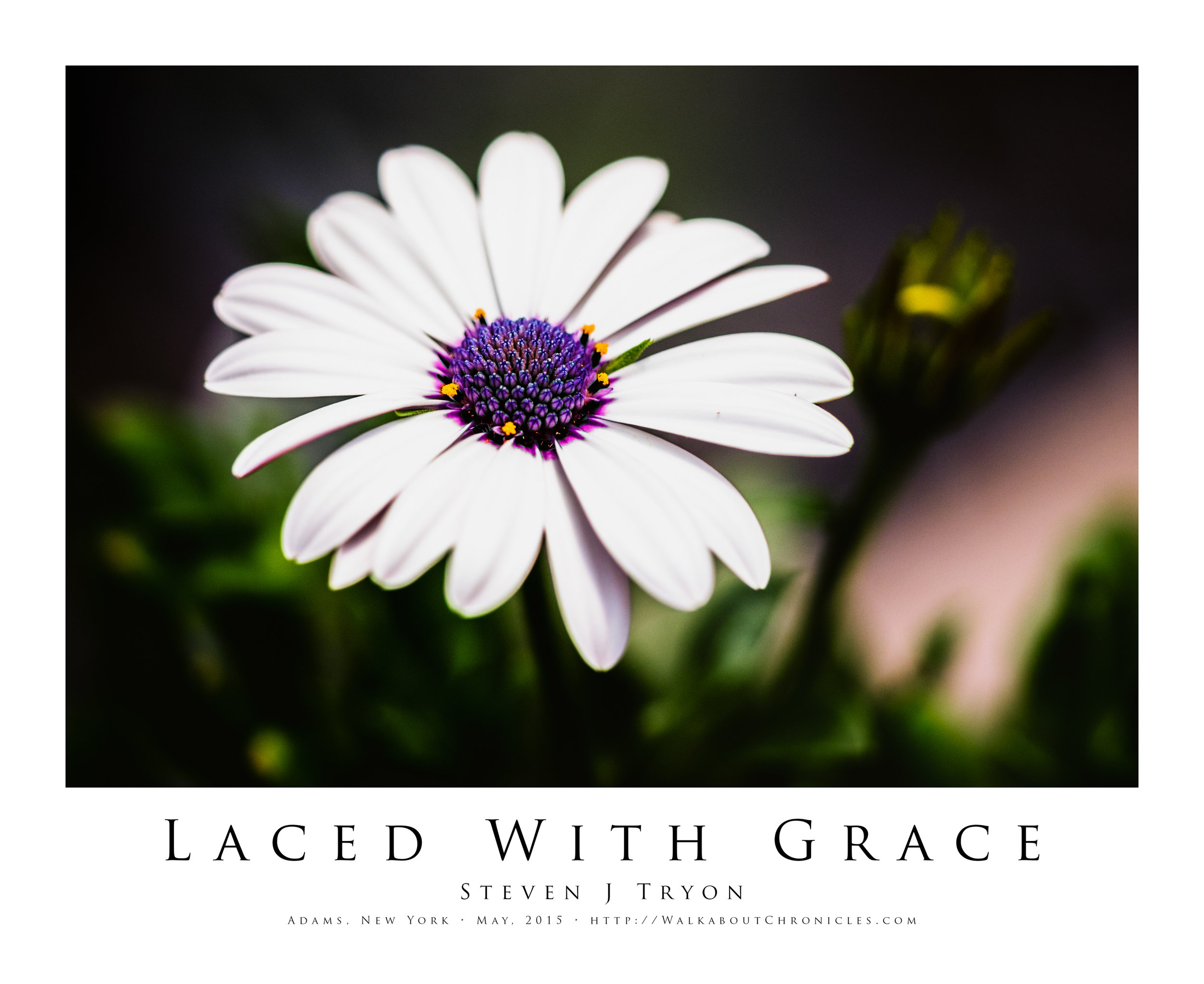 Laced With Grace