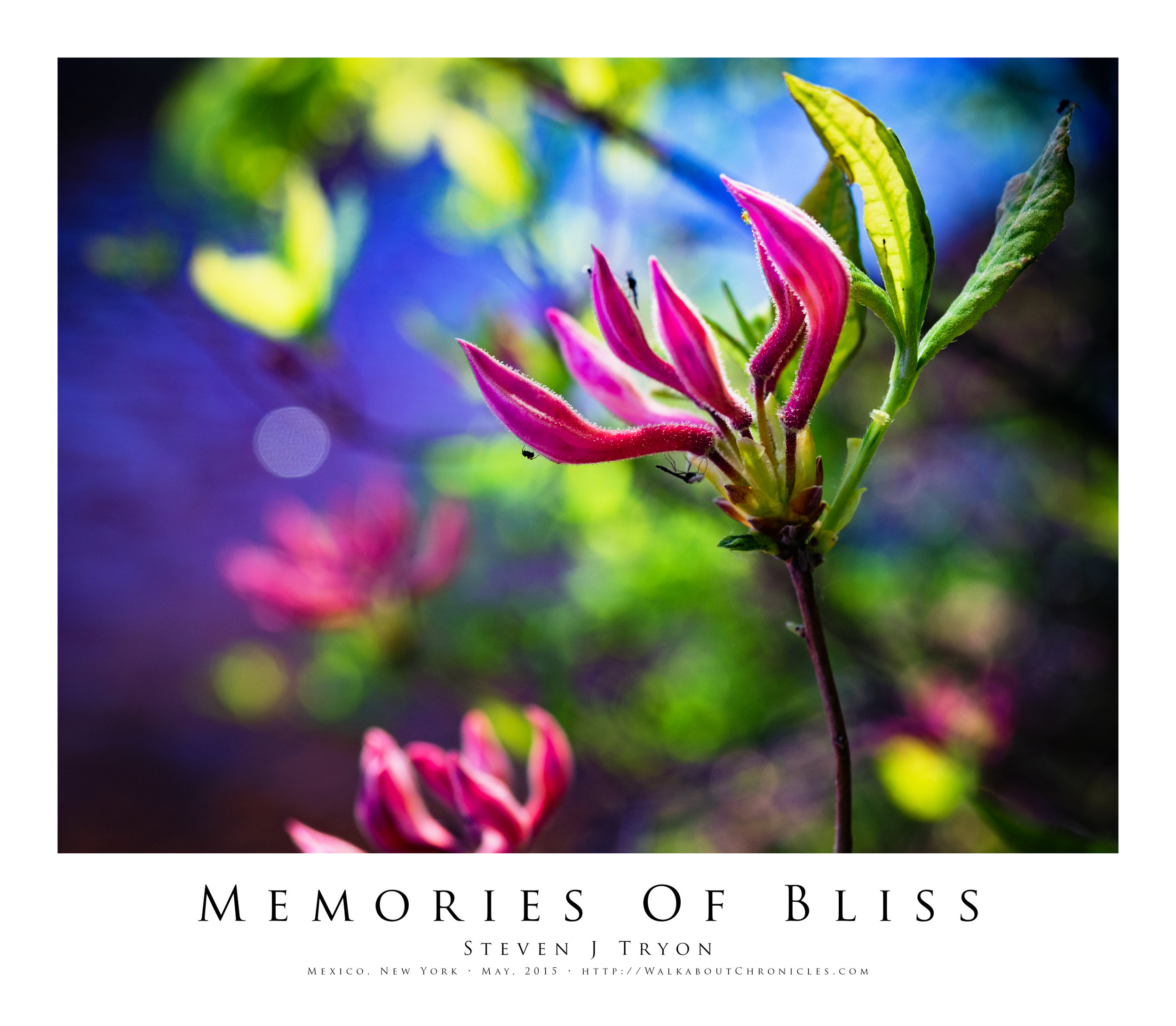 Memories Of Bliss